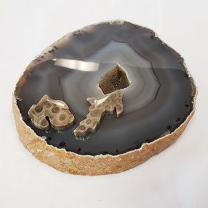 Decor Agate Slab with Fossilized Coral Accents
